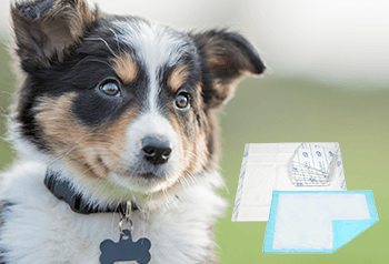 BLOG-4-MUST-HAVE-PUPPY-PADS-AND-OTHER-HELPFUL-PRODUCTS-FOR-DOG-OWNERS.png